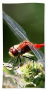 August Dragonfly  Beach Towel
