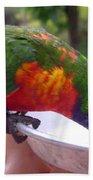 Australia - One Wet Lorikeet Feeding Beach Towel