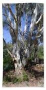 Australian Native Tree 5 Beach Towel