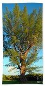 Australian Pine At Sundown Beach Towel