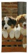 Australian Sheepdog Puppies Beach Towel