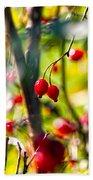 Autumn Berries  Beach Towel