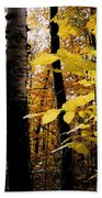 Autumn Birch Trees Beach Towel