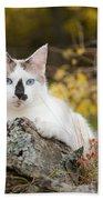 Autumn Cat Beach Sheet