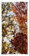 Autumn Chestnut Canopy   Beach Towel