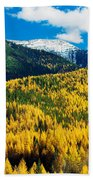 Autumn Color Larch Trees In Pine Tree Beach Towel
