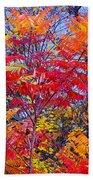 Autumn Colors - 113 Beach Towel