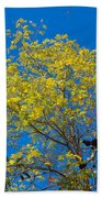 Autumn Colors Against The Sky Beach Towel