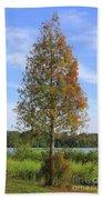 Autumn Cypress Tree Beach Towel