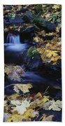Autumn Fall Colors Starvation Creek State Park Beach Towel