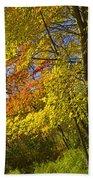 Autumn Forest Scene In West Michigan Beach Towel