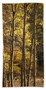 Autumn Forest Scene With Birches In West Michigan Beach Towel