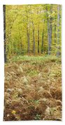 Autumn Forest - White Mountains New Hampshire Beach Sheet