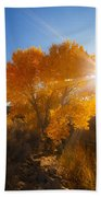Autumn Golden Birch Tree In The Sun Fine Art Photograph Print Beach Towel