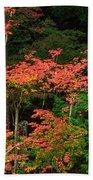 Autumn In Mount Rainier Forest Beach Towel