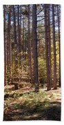 Autumn In The Pines Beach Towel