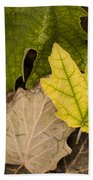 Autumn Is Coming 1 Beach Towel