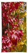 Autumn Leaves In Palo Duro Canyon 110213.97 Beach Towel