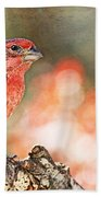Autumn Male House Finch 1 Beach Towel