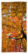 Autumn Maple Trees Beach Towel