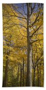 Autumn Orange Forest Colors At Hager Park No.1189 Beach Towel