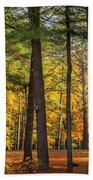 Autumn Pines Square Beach Towel