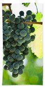 Autumn Ripe Red Wine Grapes Right Before Harvest Beach Towel by Ulrich Schade