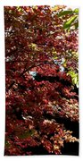 Autumn Snowball Bush Beach Towel