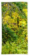 Autumn Splendor 14  Beach Towel