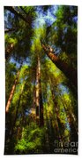 Autumn Sunlight Cast On Majestic Green Oregon Old Growth Forest  Beach Towel