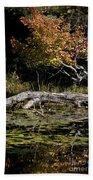 Autumn Swamp Beach Towel