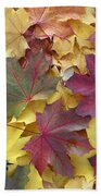 Autumn Sycamore Leaves Germany Beach Towel