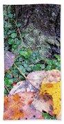 Autumn Tree Trunk  Beach Towel