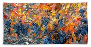 Autumn Vineyard Sunlight Beach Towel
