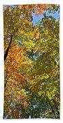 Autumn Woods Sky View Beach Towel