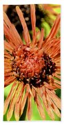 Autumn's Gerber Daisy Beach Towel