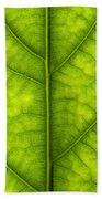 Avocado Leaf Beach Towel
