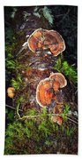 Awe Inspiring Fungi Beach Towel