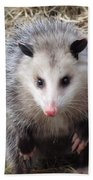 Awesome Possum Beach Towel