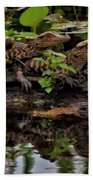 Baby Alligators Reflection Beach Towel