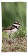 Baby - Bird - Killdeer Beach Towel