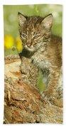 Baby Bobcat At Play Beach Towel