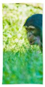 Baby Chimp In The Grass Beach Towel
