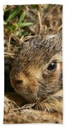Baby Eastern Cottontail Beach Towel