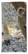 Baby Deer Beach Towel