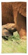 Baby Elephant Feeding Beach Towel