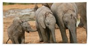Baby Elephant Trio Beach Sheet