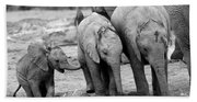 Baby Elephant Trio Bw Beach Sheet