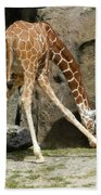 Baby Giraffe 1 Beach Sheet