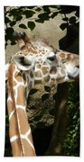 Baby Giraffe 2 Beach Towel